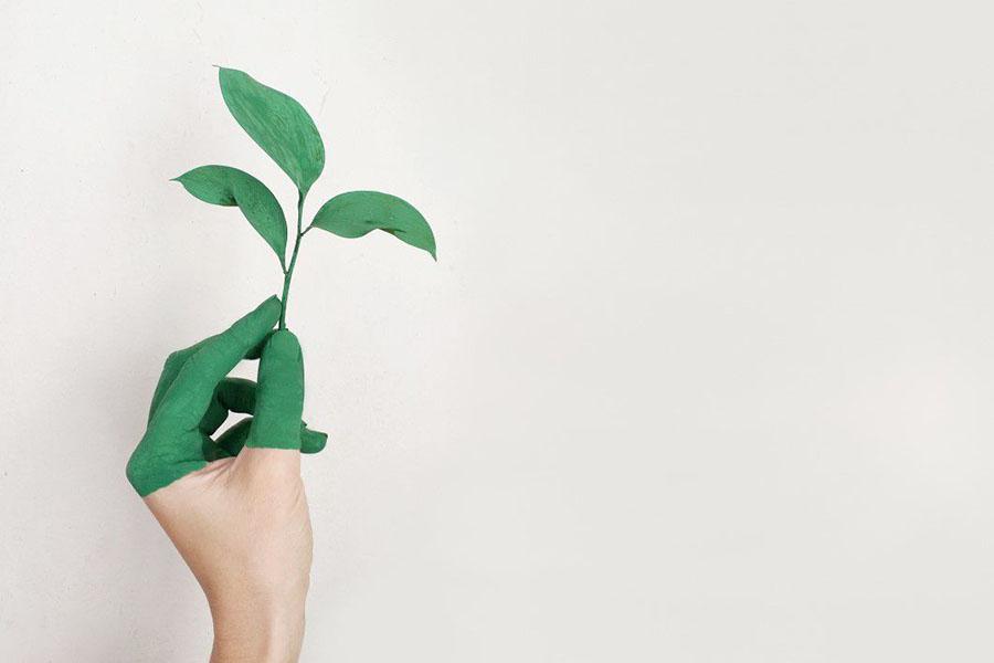 Greenwashing Reduces Effect of Market Feedback on Buying Green